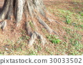 tree, wood, herbaceous 30033502