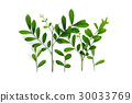 Frame Of Fresh Green Leaves on white background 30033769