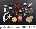 Arrangement of assorted sea life on black 30034179