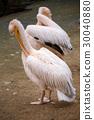 beak, bird, birds 30040880
