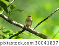 나무에 짹짹 야 부사 메 30041837