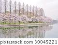 ดอกซากุระบาน,ซากุระบาน,จุดสนใจ 30045221