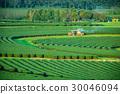 ชา,พื้นหญ้า,ทุ่งนา 30046094