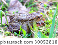 frog muzzle grass 30052818