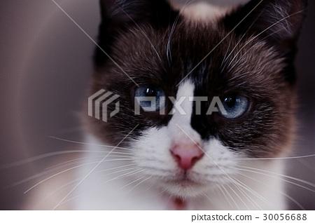cat muzzle pet close 30056688