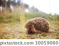 prickly baby wildlife 30059060