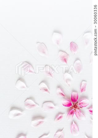 top view on round pattern of sacura flowers laying 30060336