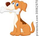 動物 狗 狗狗 30062970