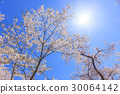 Cherry blossoms and sun in blue sky 30064142