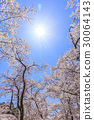 Cherry blossoms and sun in blue sky 30064143