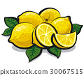 fresh juicy lemons 30067515