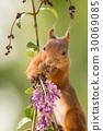 flower support 30069085