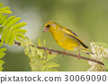 animal, look, finch 30069090