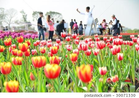 漂亮的鬱金香花園與可愛的人影 30071330