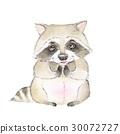raccoon, cute, color 30072727