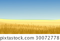 Field of yellow grass against blue sky. 30072778