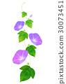 牽牛花 花朵 花 30073451