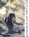 girl touching elephant's trunk 30073728