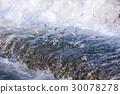 淡水鱼 香鱼 喷水 30078278