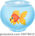 Gold fish in aquarium 30078632
