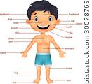 Vocabulary part of body 30078765