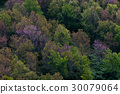 Deciduous forest in autumn colors.  30079064