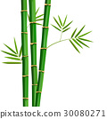 Fresh bamboo tree and leaves isolated on white 30080271
