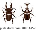 stag, beetle, rhinoceros 30084452