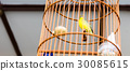 Yellow bird in wooden cage 30085615