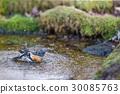 นก,แหล่งน้ำ,สระน้ำ 30085763