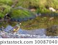 นก,แหล่งน้ำ,สระน้ำ 30087040