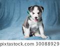 puppy animal dog 30088929