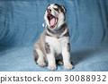 puppy animal dog 30088932