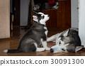 puppy animal dog 30091300