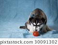 puppy animal dog 30091302