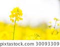 봄의, 꽃, 식물 30093309