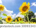 植物 植物学 植物的 30093343