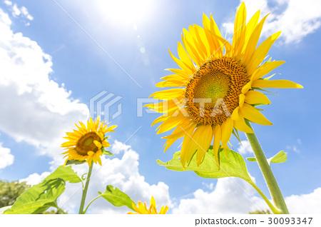 植物 植物學 植物的 30093347