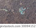 rhinoceros beetle larva on the ground . 30094152