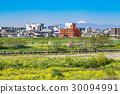 河川敷の菜の花 30094991