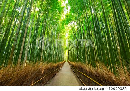 Arashiyama bamboo forest in Kyoto Japan 30099085