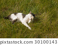 A cute cat relaxing on the grass in the garden 30100143