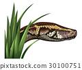 蛇 青草 草地 30100751