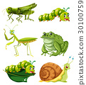 Different types of insects in green color 30100759