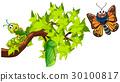 蝴蝶 樹木 樹 30100817