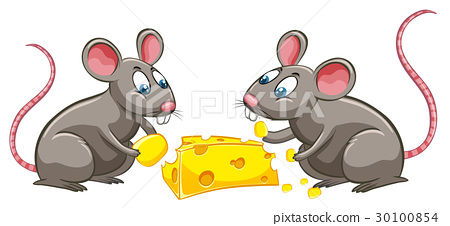 Two rats eating cheese 30100854