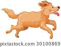 Golden retriever dog running 30100869