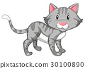 Gray cat with happy face 30100890