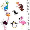 Bird cartoon collection 30103142
