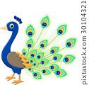 Peacock cartoon 30104321